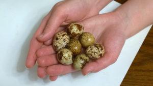 Перепелиные яйца польза и вред для женщин миома матки
