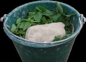 Настой крапивы польза и вред для растений