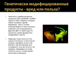 Трансгенные животные и растения польза и вред