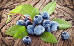 Голубика садовая польза и вред для здоровья