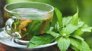 Иван чай с мятой польза и вред