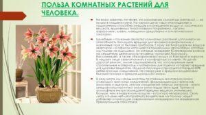 Польза и вред растений в жизни человека