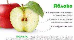 Яблоки польза и вред для женщин