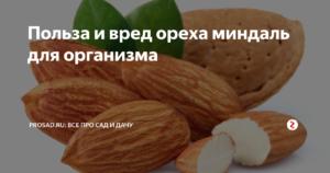 Миндаль орех польза и вред для организма человека