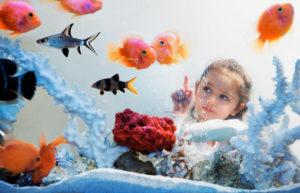 Аквариум в детской комнате вред и польза