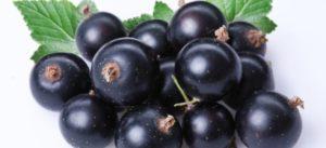 Черная смородина замороженная польза и вред для здоровья