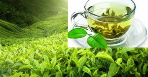 Зеленый чай с мелиссой вред и польза и вред