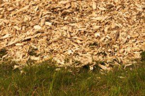 Сосновые опилки вред и польза и вред