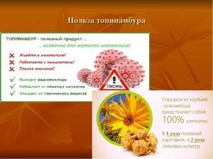Топинамбур листья польза и вред рецепты приготовления