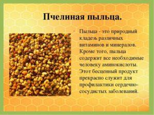 Пчелиная пыльца польза и вред как принимать детям