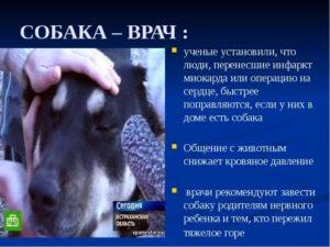 Собака в доме вред и польза и вред