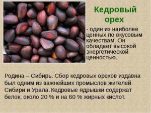 Кедровый орех польза и вред для женщин