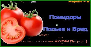 Вред и польза томатов на почки или печени