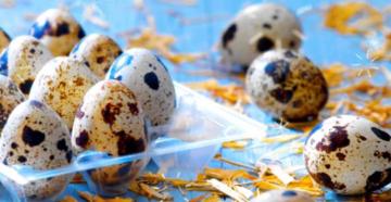 Сырые перепелиные яйца польза и вред для мужчин