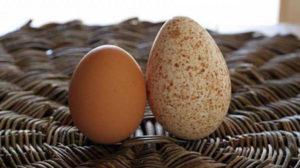 Индюшачьи яйца польза и вред для женщин