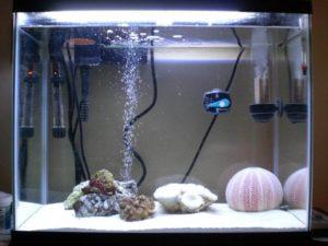 Сильная аэрация в аквариуме вред или польза