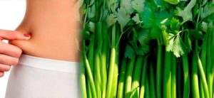 Сельдерей польза и вред для здоровья женщины похудения