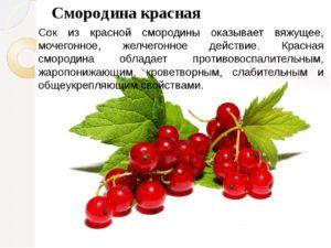 Листья красной смородины польза и вред для здоровья