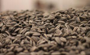Сырые семечки подсолнуха польза и вред для женщин