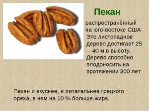 Орехи пекан польза и вред для организма