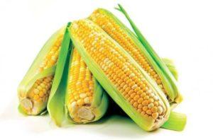 Свежая кукуруза в початках польза и вред
