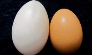 Утиное яйцо польза и вред как употреблять