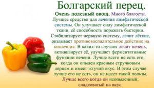 Перец болгарский польза и вред для организма человека