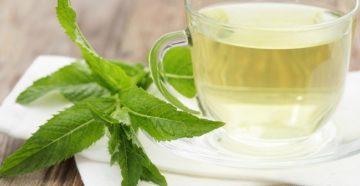 Чай с мятой польза и вред для женщин при похудении